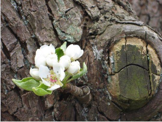 10-7_Voorjaar_2_Je_stelt_vast_-_het_is_het_ene_leven_dat_ontwaakt