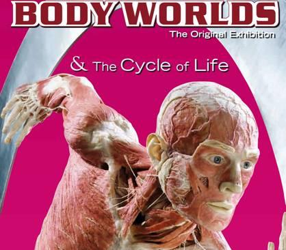 11-17_bodyworlds